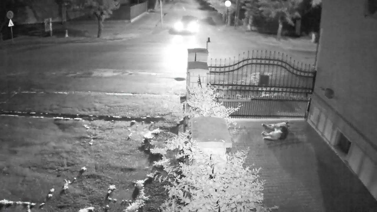 【監視カメラ映像】敷地内でくつろいでいた犬が猛スピードの車に引かれる事故