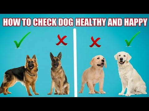 How to Check Your Dog Healthy Or Not | In Hindi | Dog care | How to check your dog good health
