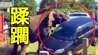【衝撃映像】動物VS人間 危機一髪のハプニング集!野生の前に蹂躙される...