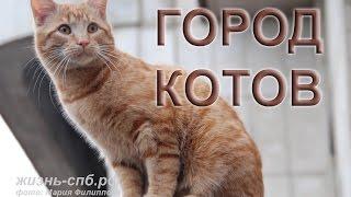 Мартовские городские коты Петербурга - Street cats Petersburg