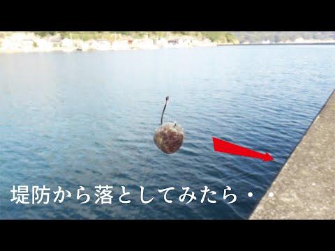 4ヶ月かかって作った釣り餌を堤防から落とした結果!