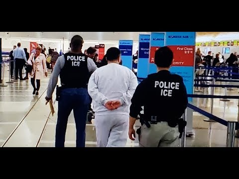 Ice Police U.S. Immigration And Customs Enforcement At Work Lax