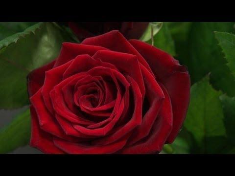 saint valentin la vente de fleurs en ligne cartonne youtube. Black Bedroom Furniture Sets. Home Design Ideas