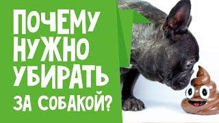 Как у них или почему нужно убирать за собакой(, 2019-03-06T13:35:20.000Z)