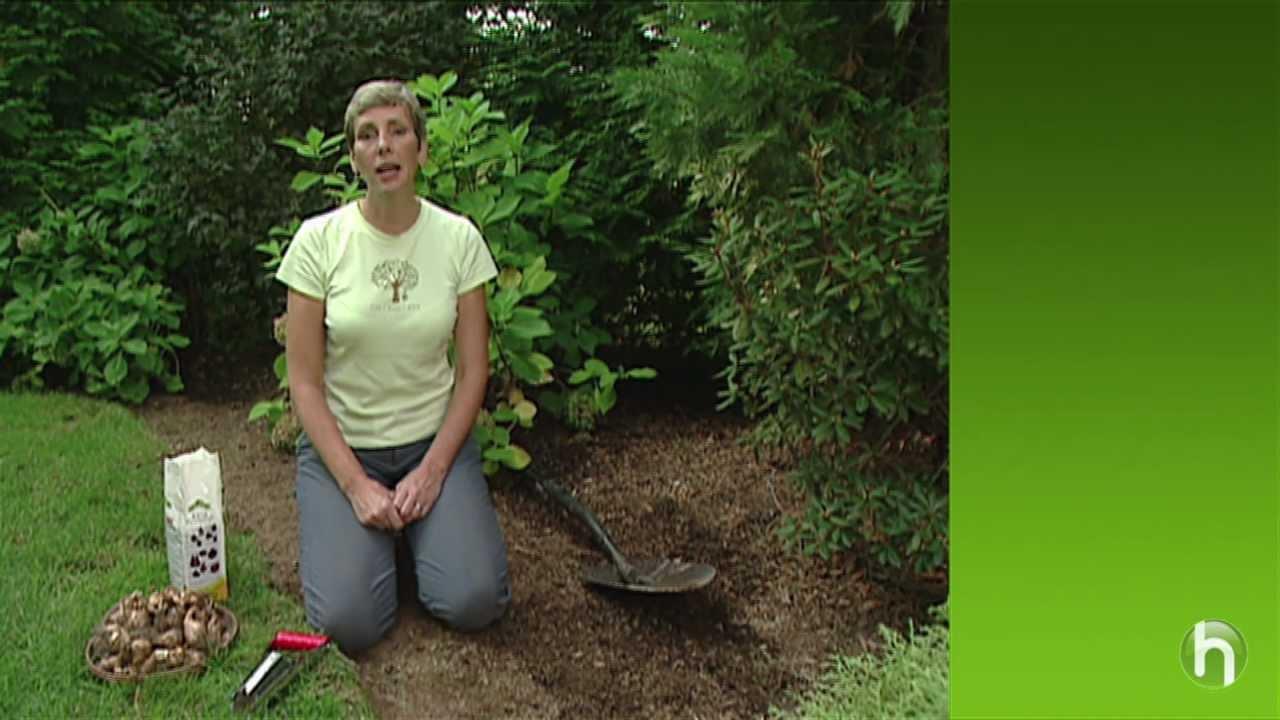 Comment planter des bulbes youtube - Comment planter des bulbes ...