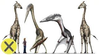 10 Curiosidades de los Dinosaurios