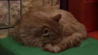 Влияние котиков на людей