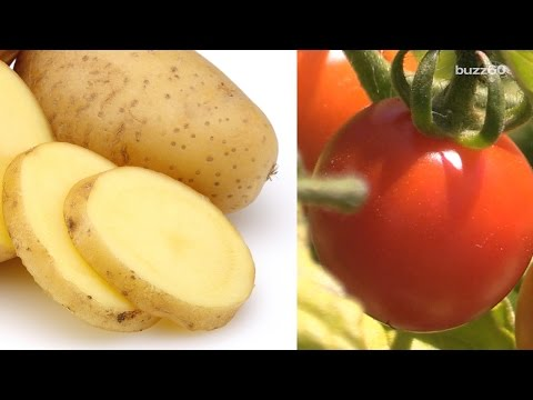 Scientists Worked Six Years to Create Plant That Grows 'Ketchup and Fries'