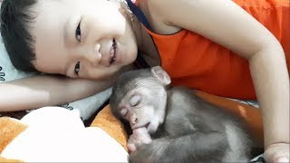 Baby Monkey | Brother Tom Helps Mom Take Care Of Little Doo