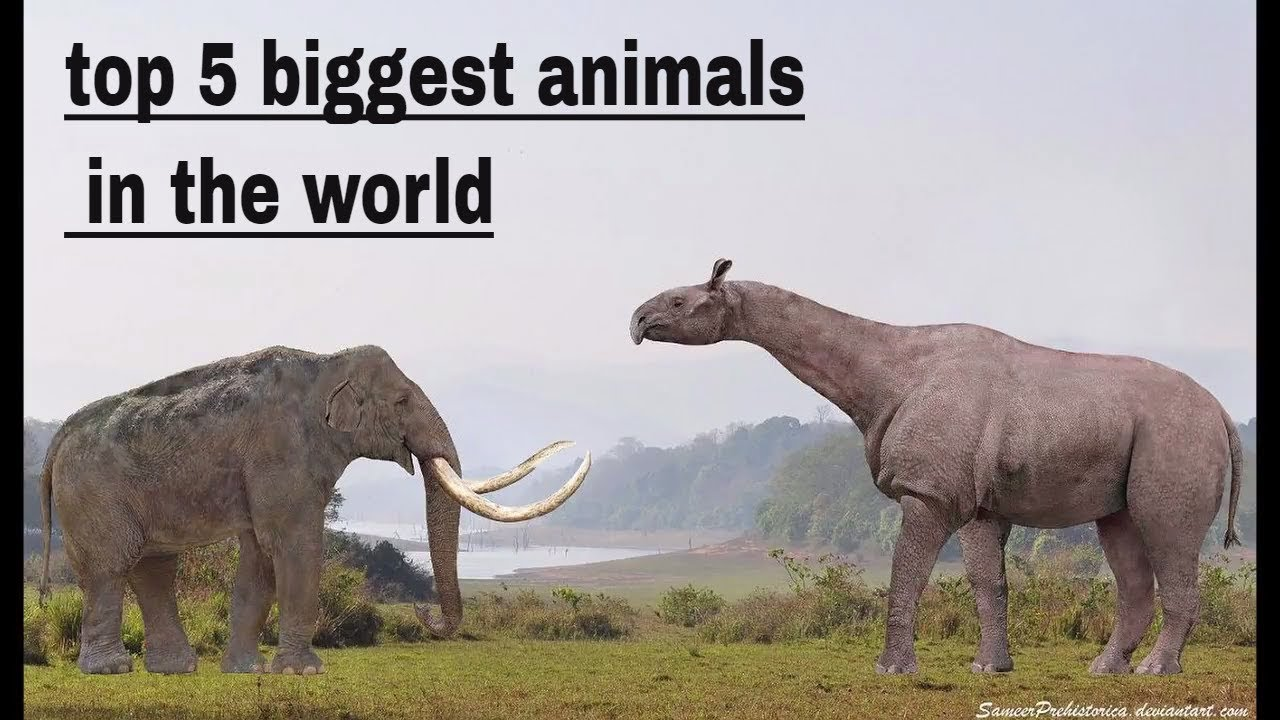 top 5 biggest animals  in the world bigger than dinosaurous    animal planet    wild hunt
