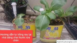 Hướng dẫn tự trồng rau tại nhà bằng chai nước rửa chén tự dẫn lưu nước - NTST
