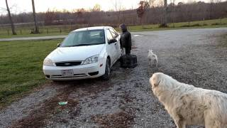 funny dogs scared