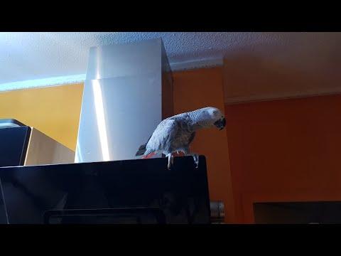 Чумачедший попугай матершинник ЖЖЁТ 😝