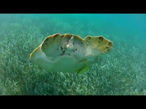 Guatemala Belize Discovery - Avventure Nel Mondo