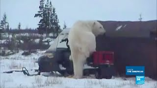 Canada: Welcome to Churchill, the polar bear territory!