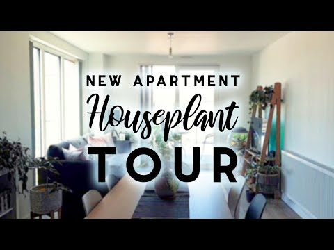 Summer 2019 Houseplant Tour! | In My New Apartment!