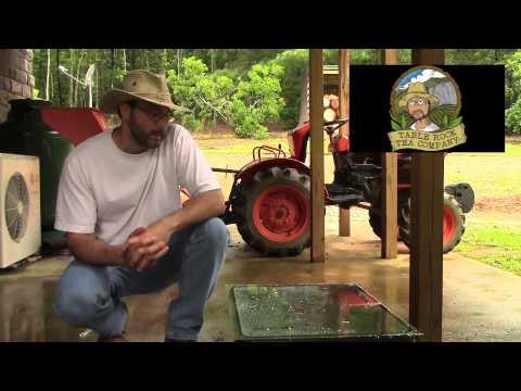 Tea Plant Variety Intro