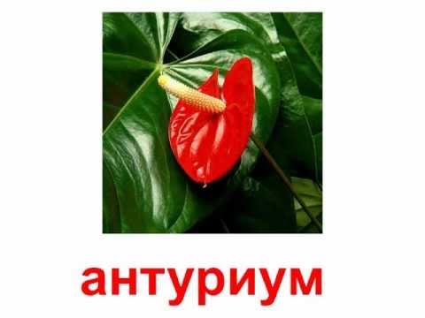 комнатные цветы энциклопедия в картинках: