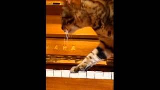 ぱるこの初ピアノ、こんな演奏になりました♪ SE:【無料効果音で遊ぼう】 http://taira-komori.jpn.org/event01.html.