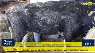 Koszmar zwierząt w jednym z gospodarstw w Wodzisławiu