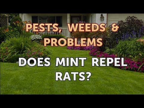 Does Mint Repel Rats?