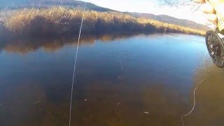 Fly fishing adventures - fishing for grayling in the Czech Republic