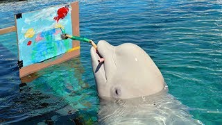 Funny Dolphin Show ★ Smart Dolphin Painting, Laughing and Playing  Funny Animals Videos