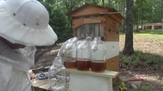 Flow Hive Honey Extraction