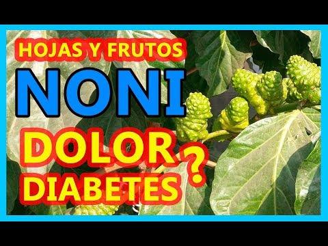 NONI frutos y hojas podrían desinflamar las ARTICULACIONES y regular la GLUCOSA
