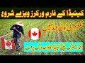 Canada Free Farm Worker Visa 2018 | Visa Guide | Urdu Hindi | MJH Studio |