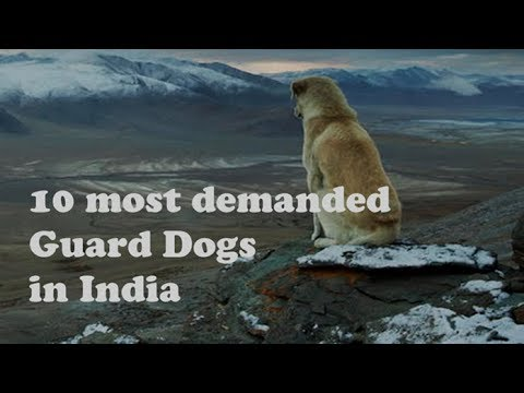 Top 10 Guard Dogs in India