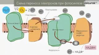 фотосинтез та хемосинтез
