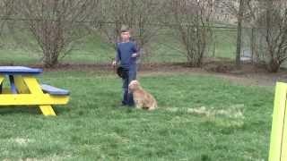 Super Fun Family Puppy Drills