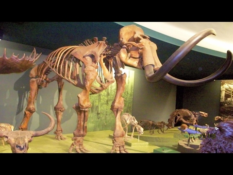 Mammoth woolly: giant mammals like elephants will soon wander the earth.