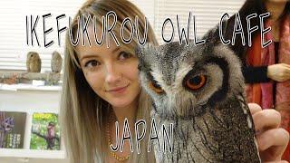 Owl Cafe in Tokyo Japan, Ikefukuro!