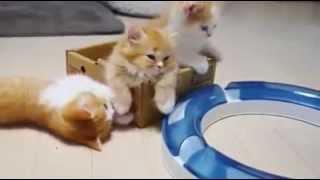 قـطـط جميلة للغاية  cats  cute