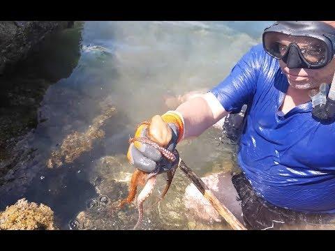 Осьминоги, Морские ежи, рыба: добываем, готовим едим.