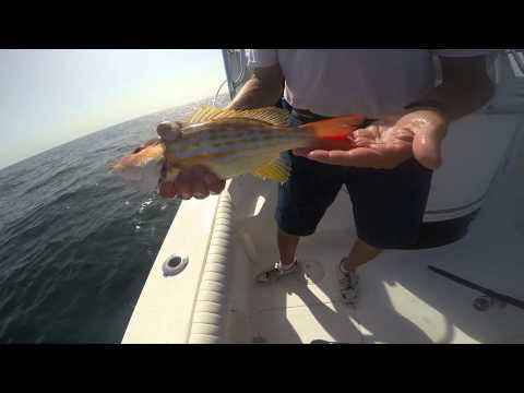Fish Factor Charter