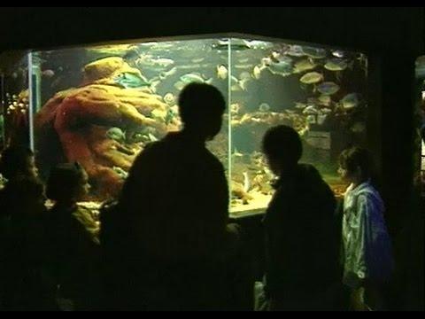 Boulogne, France: Ocean Ecology at Nausicaa