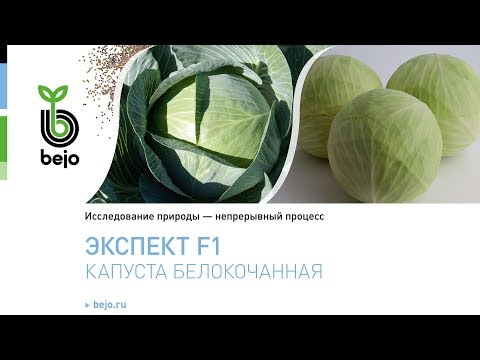Капуста белокочанная Экспект F1 | белокочанная | капуста | семена | овощи | бейо | bejo