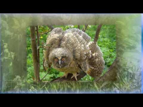 Симпатичный и смешной Совы и Owlets Компиляция 2014