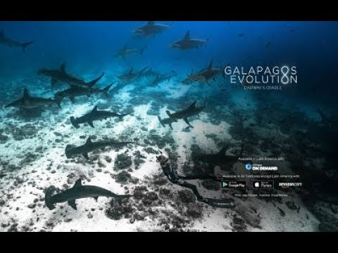 PADI | Galapagos Evolution Trailer