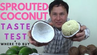 Delicious Sprouted Coconut Taste Test + Where You Can Buy