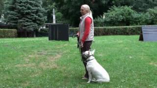 Prüfung zum Wiener Hundeführschein