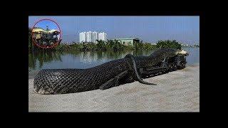 दुनिया के 5 सबसे जहरीले सांप Top 5 Most Venomous Snakes in the World