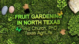 Fruit Gardening in North Texas