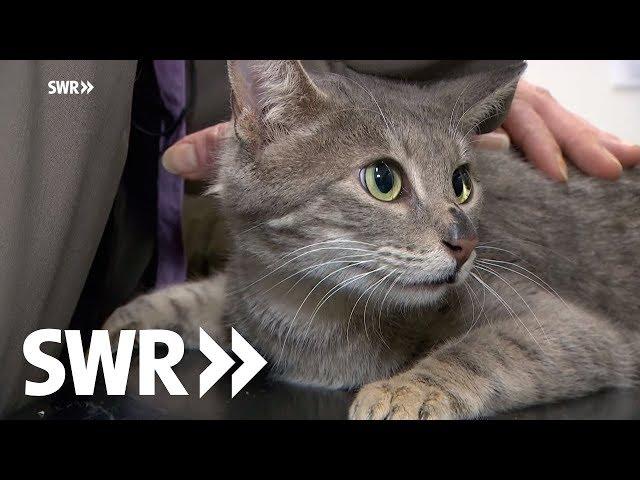 Ein Entenküken, ein Dackel und eine Katze | SWR Tierarztgeschichten