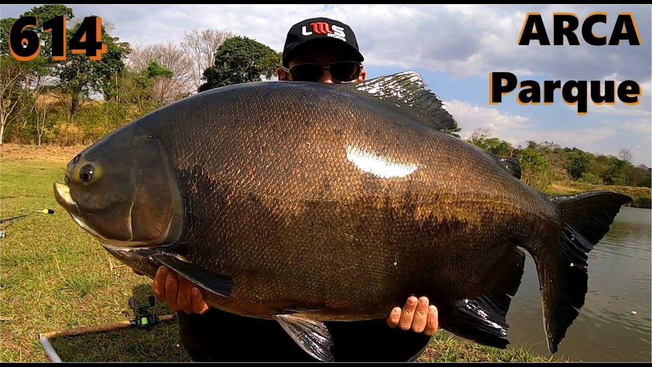 Pescaria com os Tambacus Gigantes do Arca Parque - Fishingtur 614 Pesca