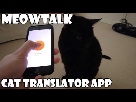 Meow Talk Cat Translator App