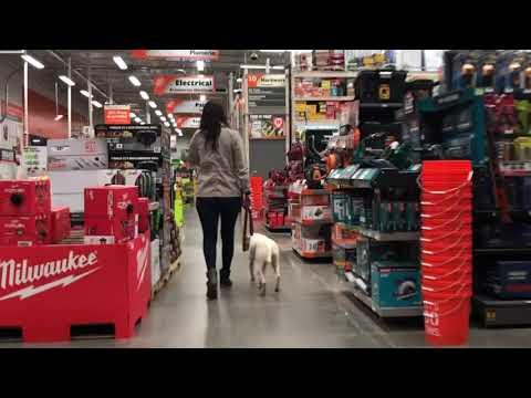 Off Leash Pitbull Lola - Dog training in Oregon